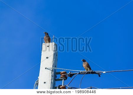 Bird perched on electric cable wires with blue sky background.