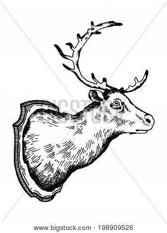 Deer head hunting trophy engraving vector illustration. Scratch board style imitation. Hand drawn image.