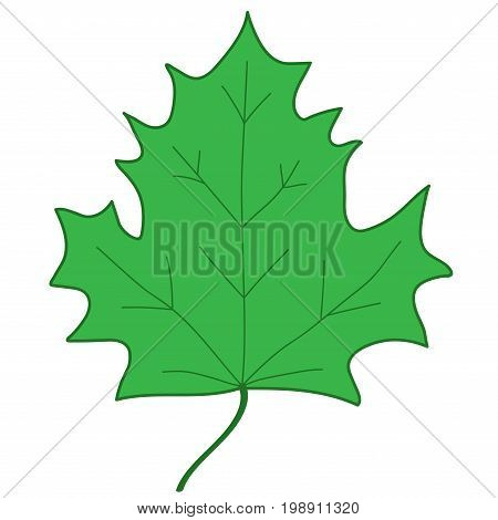 Maple leaf sign. Green plane icon isolated on white background. Color nature logo. Botany wood or garden symbol. Ecology flat silhouette. Foliage mark. Stock vector illustration