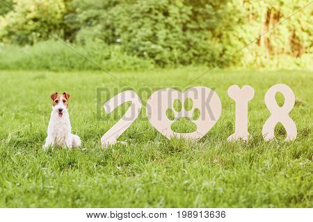 Adorable wire fox terrier dog sitting near wooden 2018 new year numbers in the park grass nature animals pets calendar festive celebrating concept.