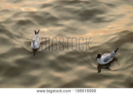 Two gulls swim in the sea on a warm day