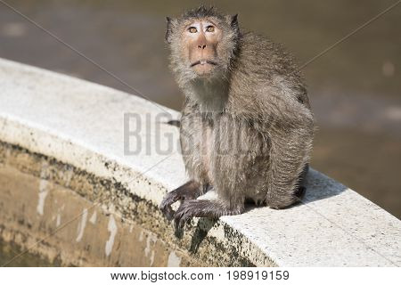 Background images Animal pictures Mammals Animal monkeys Cute animals