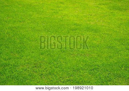 Green Grass Background perspective texture outdoor daylight