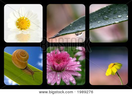 A picture of a Nature collage with nature elements poster