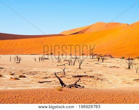 Dead camel thorn trees in Deadvlei dry pan in the middle of Namib Desert red dunes, near Sossusvlei, Namib-Naukluft National Park, Namibia, Africa.