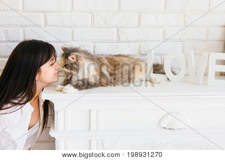 Fluffy beautiful cat and her young owner rubbing noses. Charming family pets and people's love to them