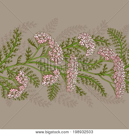 yarrow plant vector pattern on color background