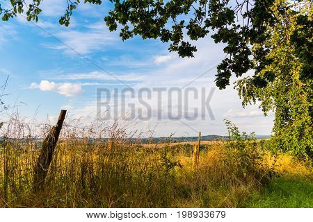 Summer Sunny Meadow With Blue Sky, Clouds And Trees