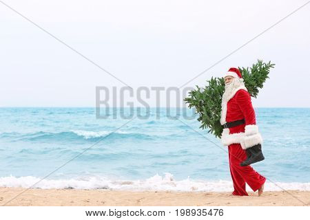 Authentic Santa Claus with Christmas tree on beach