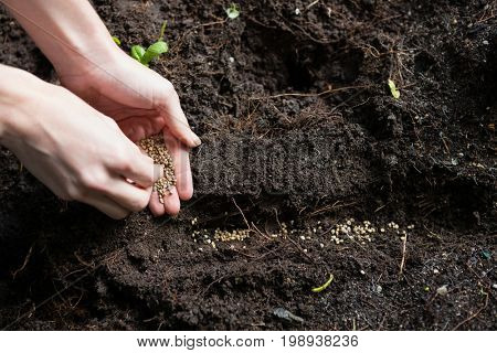 Hand of woman sowing seeds in soil at garden