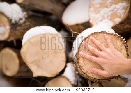Pile of old tree stumps with snow and man's hand. Person touching tree stump.