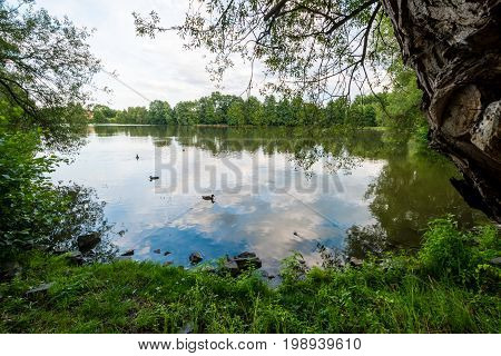 Pond With Ducks Swiming On It