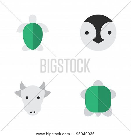Elements Kine, Tortoise, Turtle And Other Synonyms Turtle, Tortoise And Bird.  Vector Illustration Set Of Simple Animals Icons.
