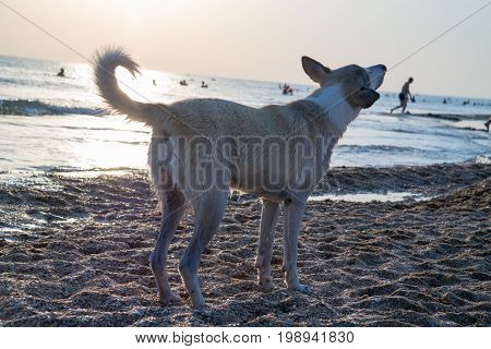 Photo of a dog in the rays of the setting sun on the seashore.