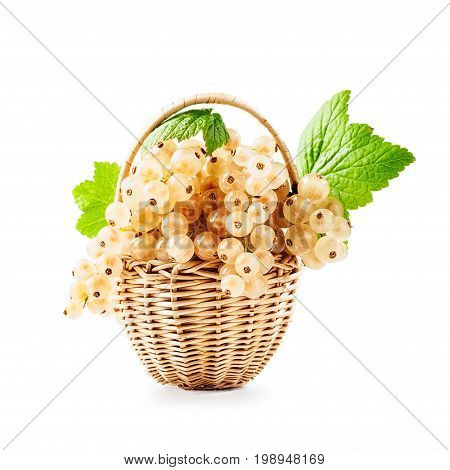Fresh white currant berries in basket isolated on white background. Healthy eating. Single object with clipping path