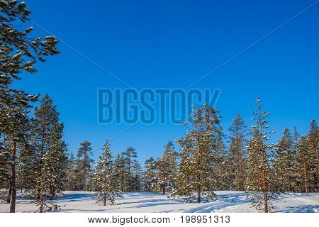 In deep snow there are blue shadows. Snowy northern winter in sunny frosty day in Lapland. The concept of active and extreme tourism