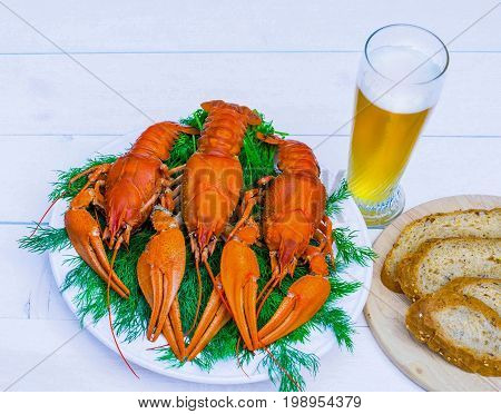 Boiled red crawfish on a white plate with green fennel on a white wooden background. Tasty red steamed rawfish closeup on wood table, glass of beer and rye bread, seafood dinner, nobody.