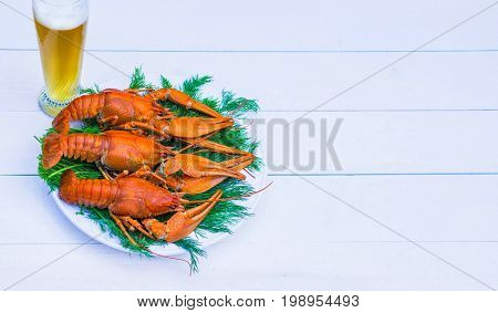 Boiled red crawfish on a white plate with green fennel on a white wooden background. Tasty red steamed rawfish closeup with glass of beer on wood table, seafood dinner, nobody. Copy space for a text.