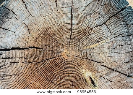 Cross Section Tree