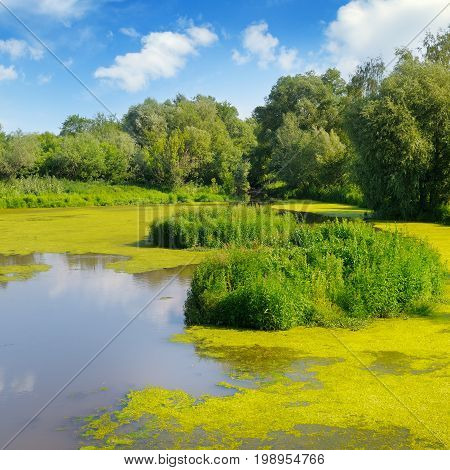 Wet lake with aquatic vegetation and sky
