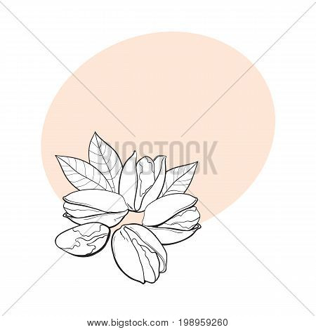 Group of black and white pistachio nuts, shelled and unshelled, sketch style vector illustration with space for text. Realistic hand drawing of pistachio nuts with leaves