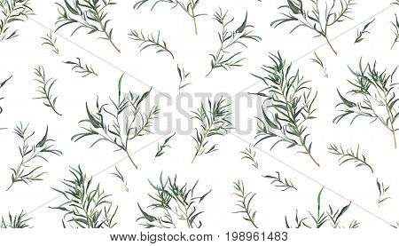 Eucalyptus seamless pattern of different willow tree foliage natural branches green leaves tropical in watercolor style. Vector decorative delicate elegant print illustration isolated white background
