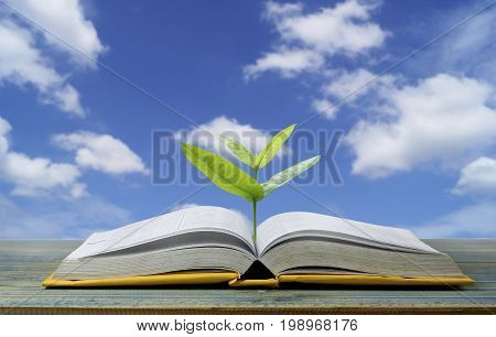 tree grow up from book with light shining as getting knowledge on blue sky background concept as opening paper will see knowledge of the world learning by yourself and improve your life everywhere