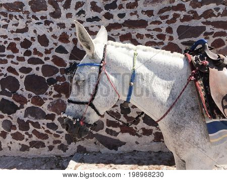 White donkey against the background of mottled stone wall