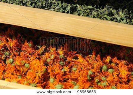 shelfs with dried plants