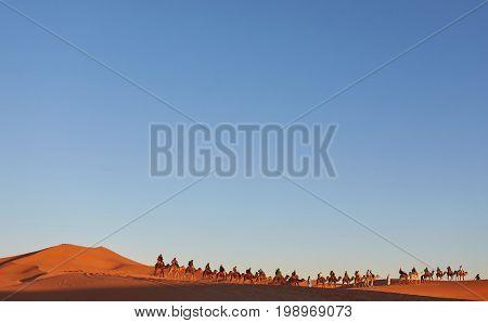 Camel Caravan Going Through The Sand Dunes In The Sahara Desert