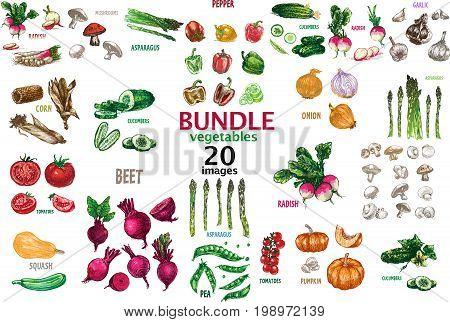 Digital raster detailed line art color 20 vegetables bundle hand drawn retro illustration collection set. Thin artistic pencil outline. Vintage ink flat style engraved simple doodle