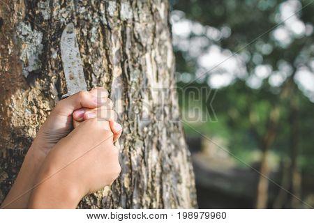 Close up hands holding knife on big tree in forest concept destructive nature