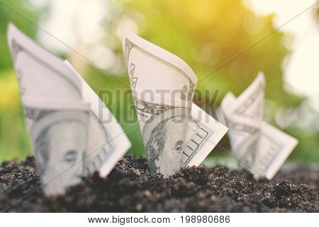 Close up dollar bill on soil .Concept economic growth color of vintage style