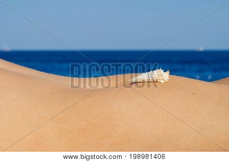 The shell lies on the tummy of a girl on the seashore