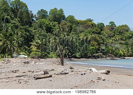 Coconut palms on the beach of drake, Costa Rica poster