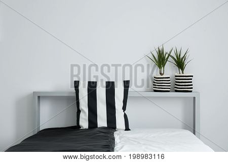 Striped pillow on black and white coverlet and two plants in striped material pots on bolster of king-size bed