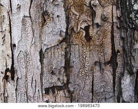 Grey wood bark texture with cracks. Raw wood board surface. Rustic lumber close-up photo. Old tree trunk peel with noise and grit. Natural wooden bark structure. Weathered tree bark closeup photo
