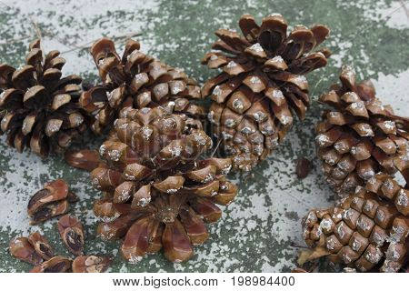 MASSA, ITALY - AUGUST 15 2015:Pinecone close up on a rustic table with pine nutsinside