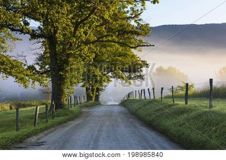 Rural Road on Foggy Summer Morning - Smoky Mountains