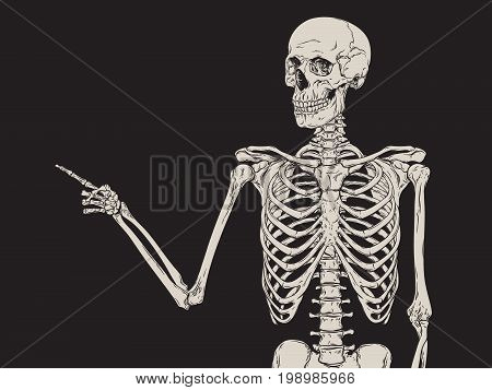 Human skeleton finger pointing isolated over black background vector illustration