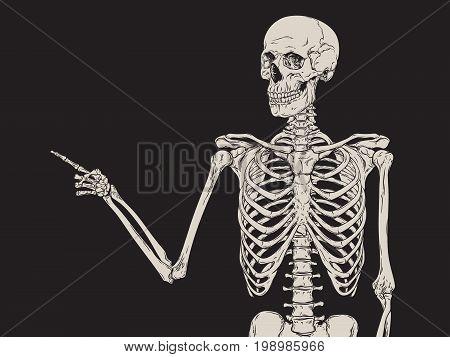 Human skeleton finger pointing isolated over black background vector illustration