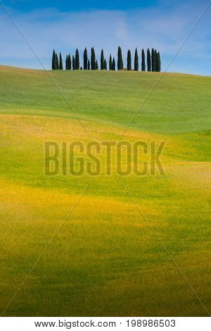 Tuscany landscape at sunrise, Trees, rolling hills and meadows, countryside landscape, Volterra, Italy, Europe.