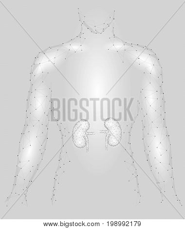 Kidneys internal organ men silhouette 3d low poly geometric model. Urology system medicine treatment. Future science technology polygonal geometric wire mesh vector illustration art