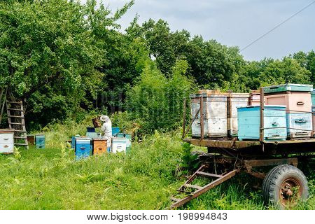 beekeeper removes honeycombs from the hive filled with fresh honey against the background of houses for bees. Beekeeping.