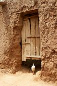 A chicken running away to a house in African village poster