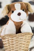puppy toy in the basket poster