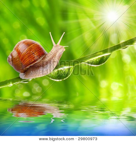 Funny picture of a speedy snail on a dewy grass.