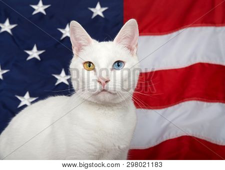 Portrait Of A White Cat With Heterochromia (odd-eyes) Looking Directly At Viewer. American Flag In B
