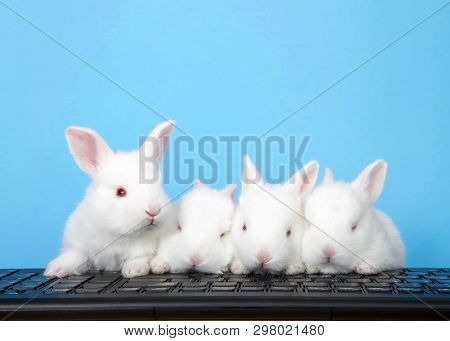 Four Adorable White Albino Baby Bunnies Perched On A Computer Keyboard With Blue Background. One Per