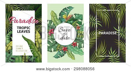 Tropical Leaves Posters. Jungle Plants Summer Flyers, Banana Palm Leaf Pattern, Foliage Design. Vect